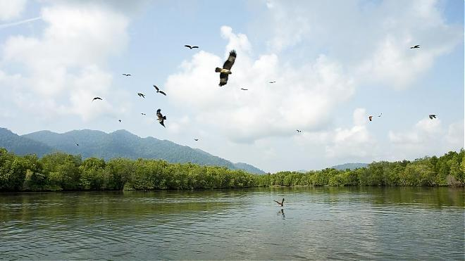 Malaysia ,Mangrove Forest and Eagle Watching