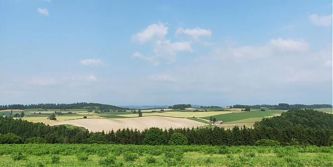 Furano・Biei! 8-Hour Private Chartered Sightseeing